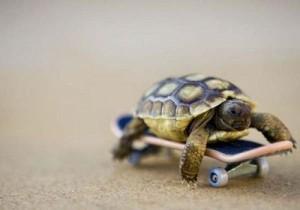 turtle-skateboard