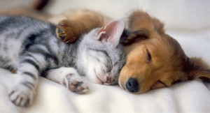 Kittens and puppies want results from display advertising. You should, too.