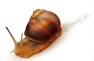 Snail - edited
